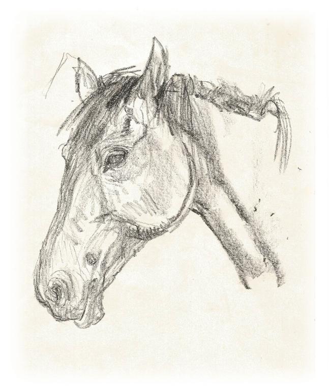 Horses's Head    Litho Crayon